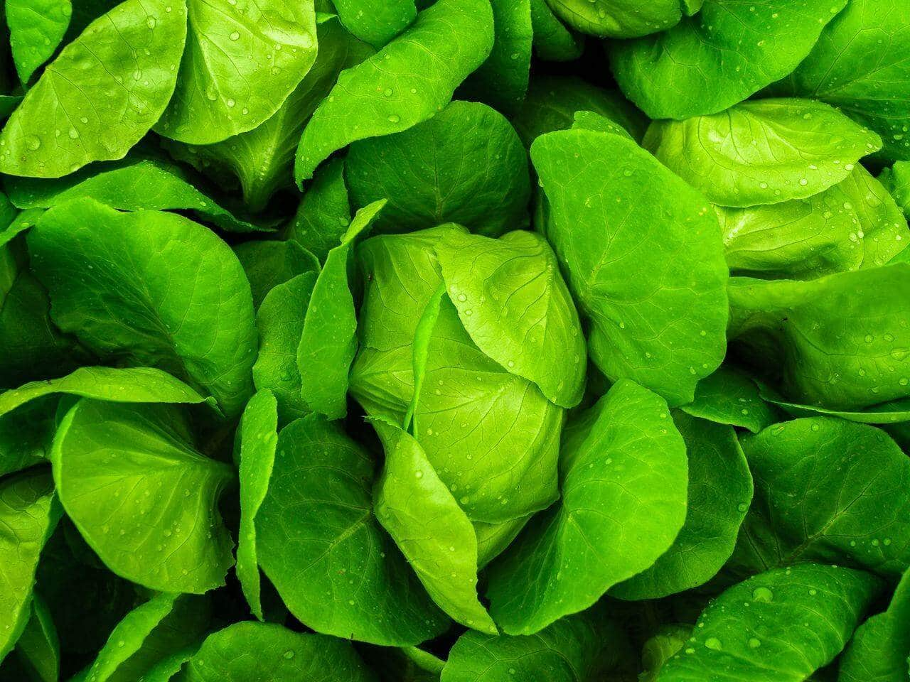 Lettuce Best Vegetables to Juice