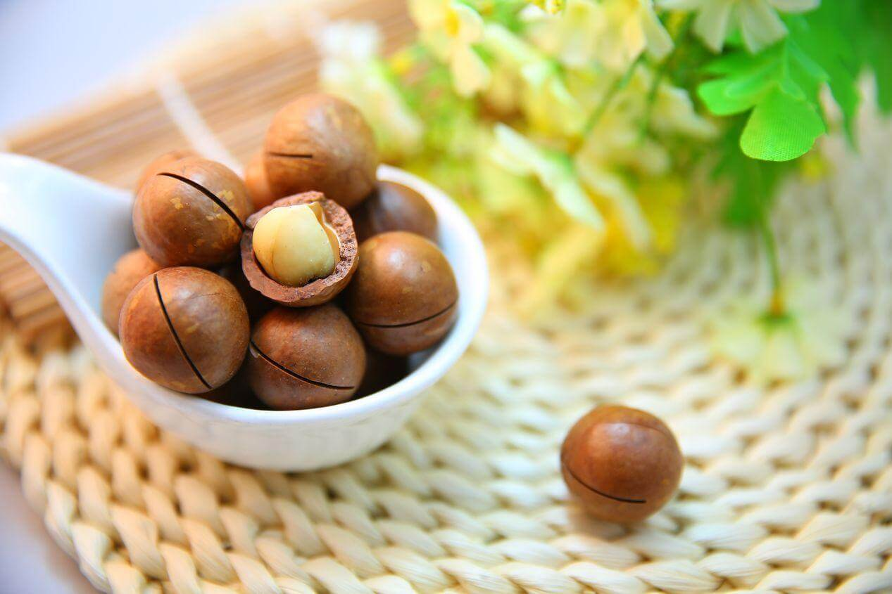 Macadamias Give You Energy