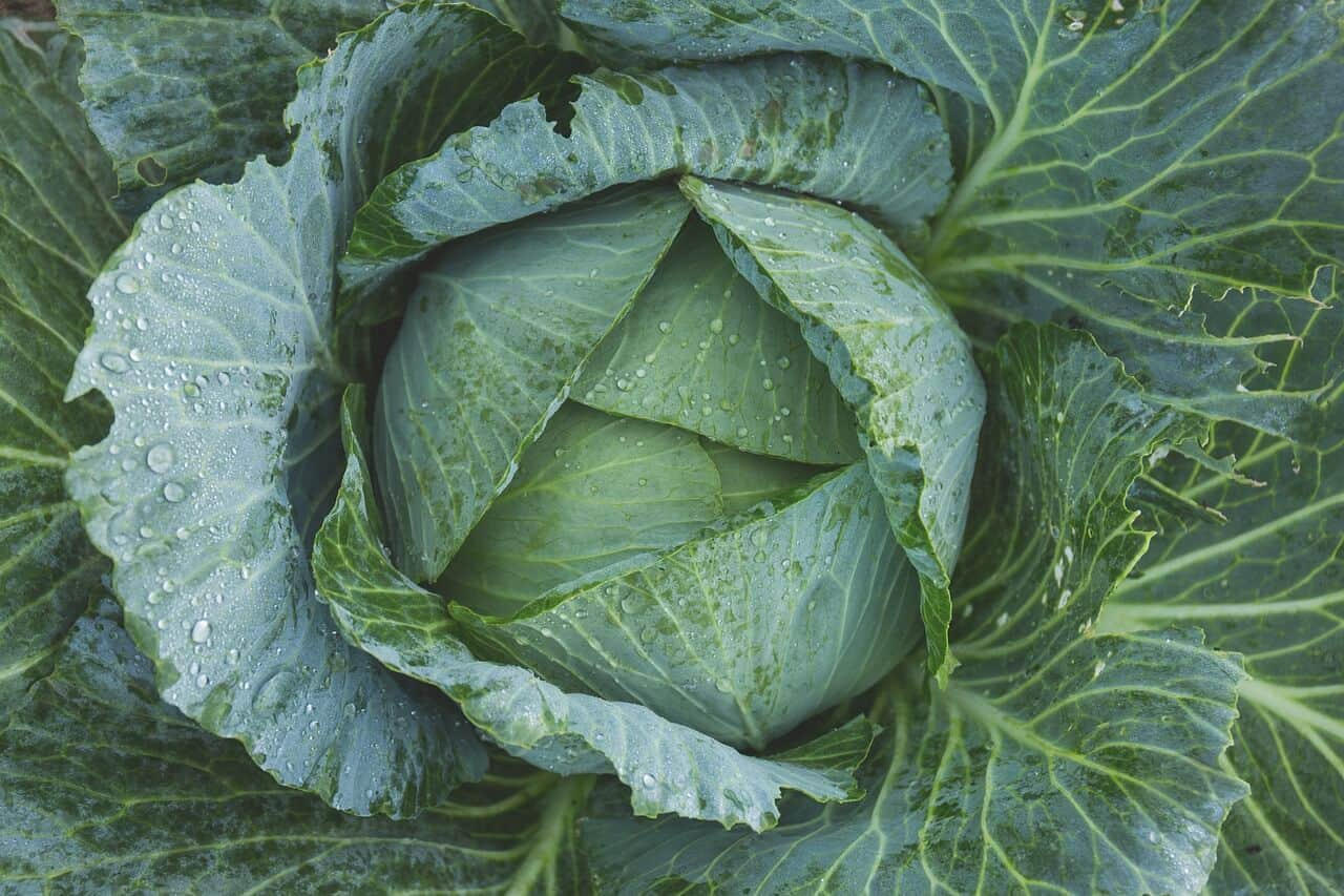 Cabbage Best Vegetables to Juice