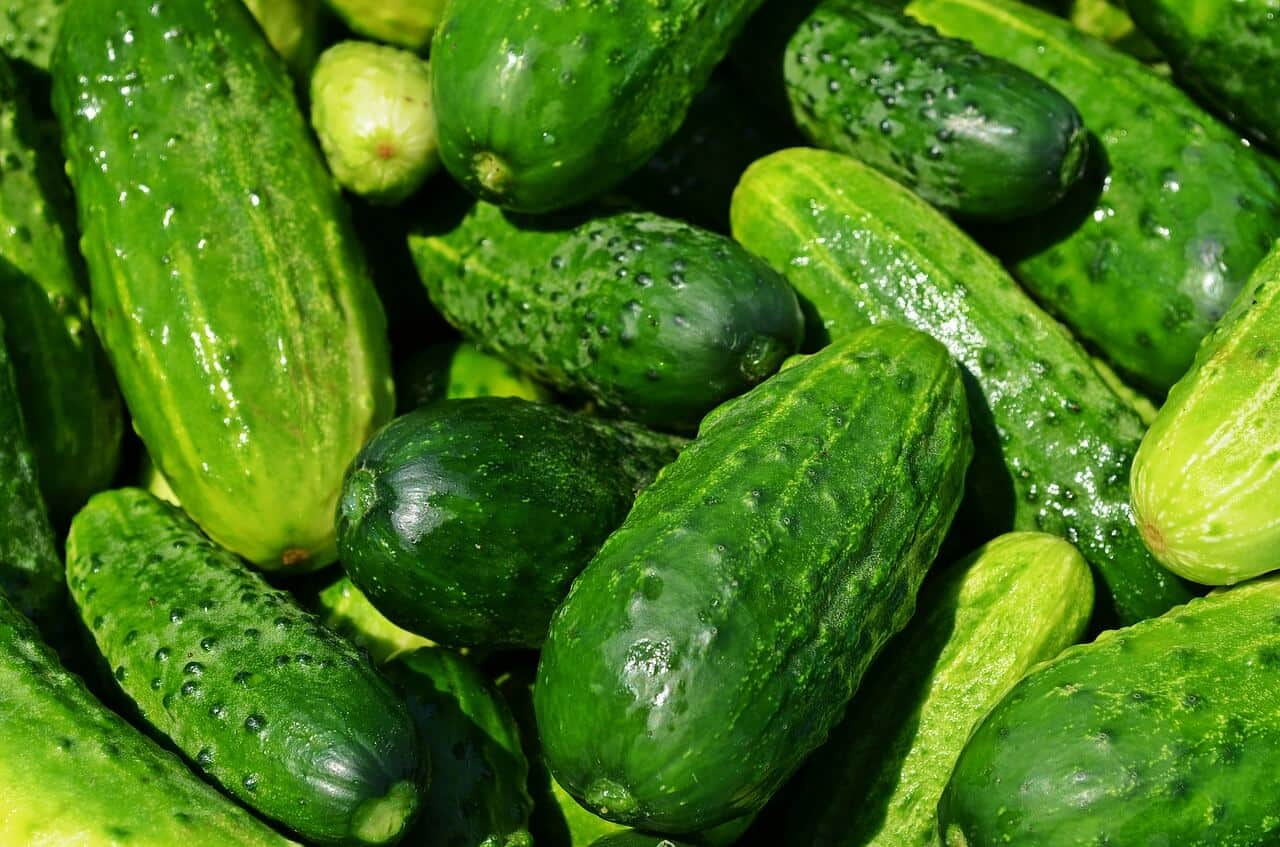 Cucumbers Best Vegetables to Juice