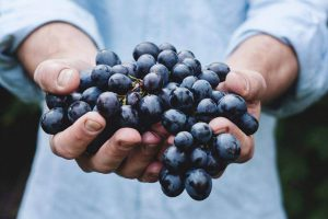 Grapes Will Help You Sleep Better At Night
