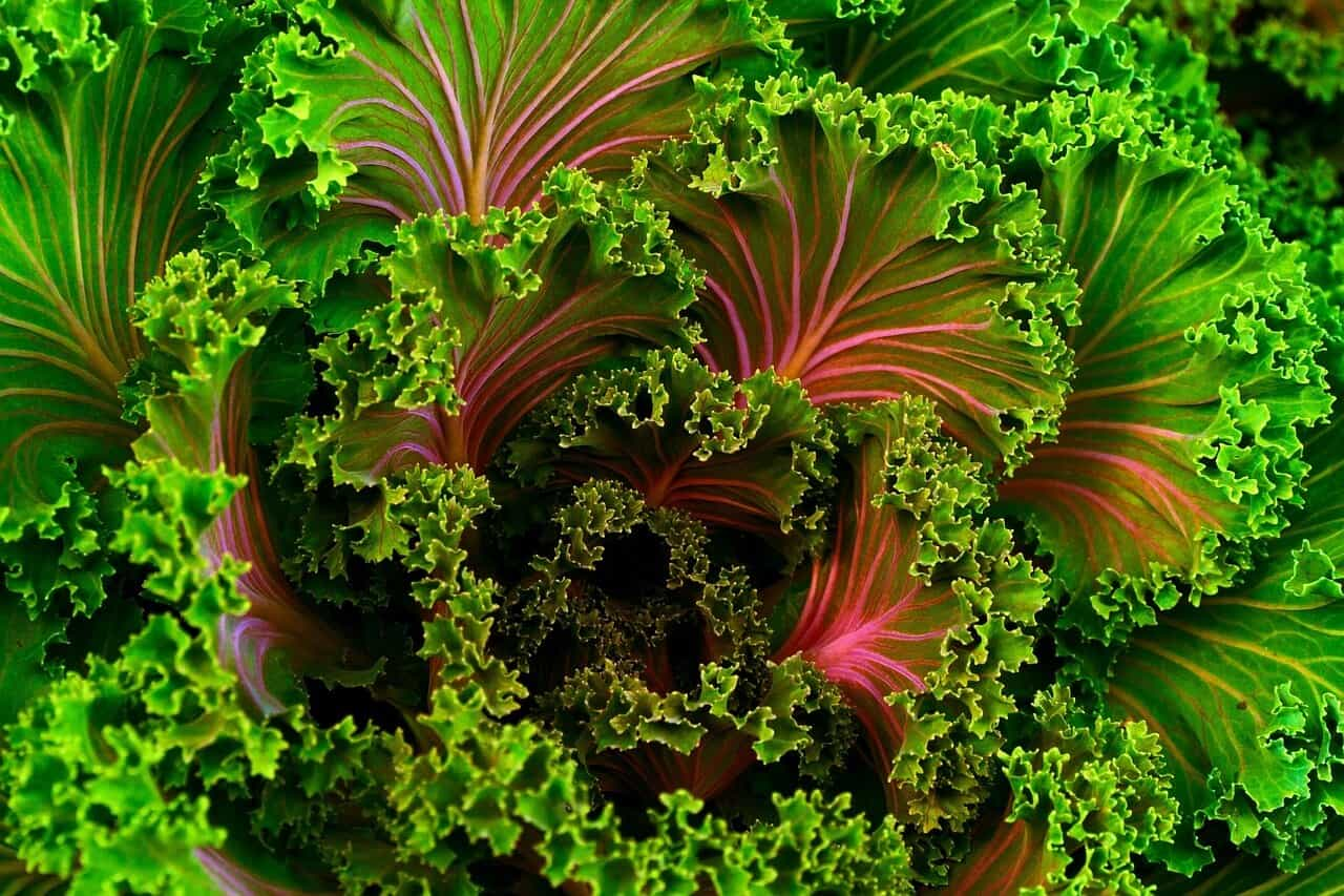 Kale Will Help You Sleep Better At Night
